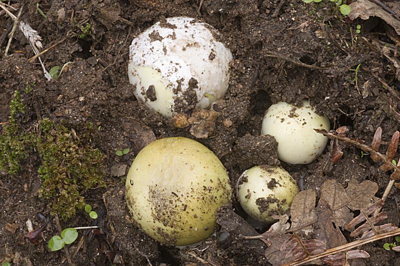 Le sale un huevo de gallina del culo - 4 1