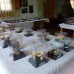 Exposición Jornadas micológicas Orihuela del Tremedal