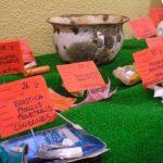 Exposición micoilogica