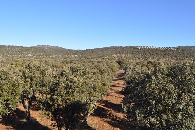 plantacion trufera