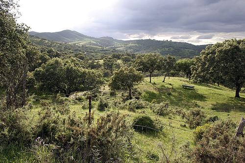 ▷ Hábitats de setas en: Sierra de Aracena | 🍄 Cesta y Setas