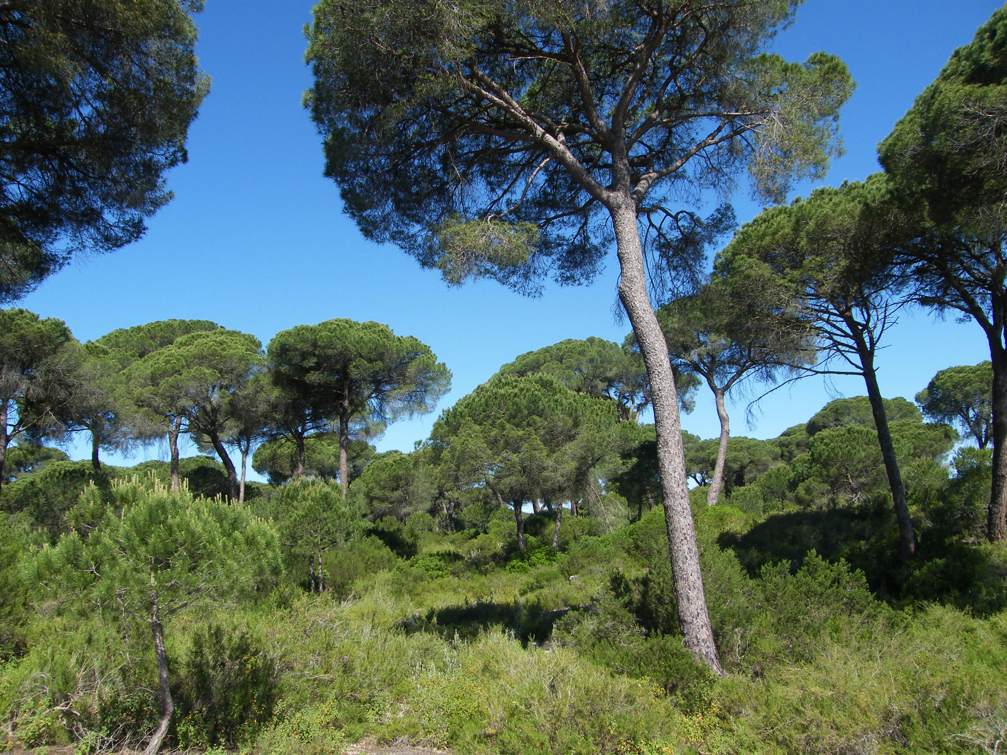 Ecosistemas dunares, típico hábitat de esta rara especie (1)