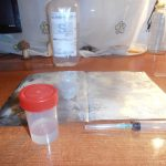 experimento colmenillas