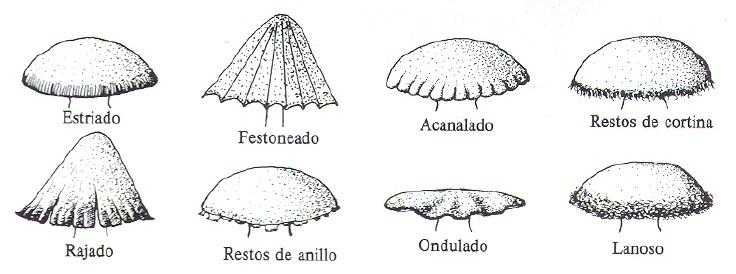 seta_tipos-sombreroborde