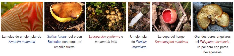 clasficacion-himenio