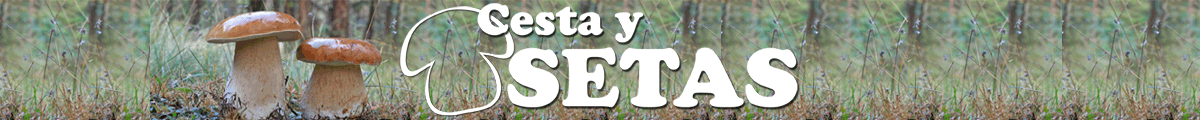 Cesta y Setas