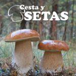 CestaySetas