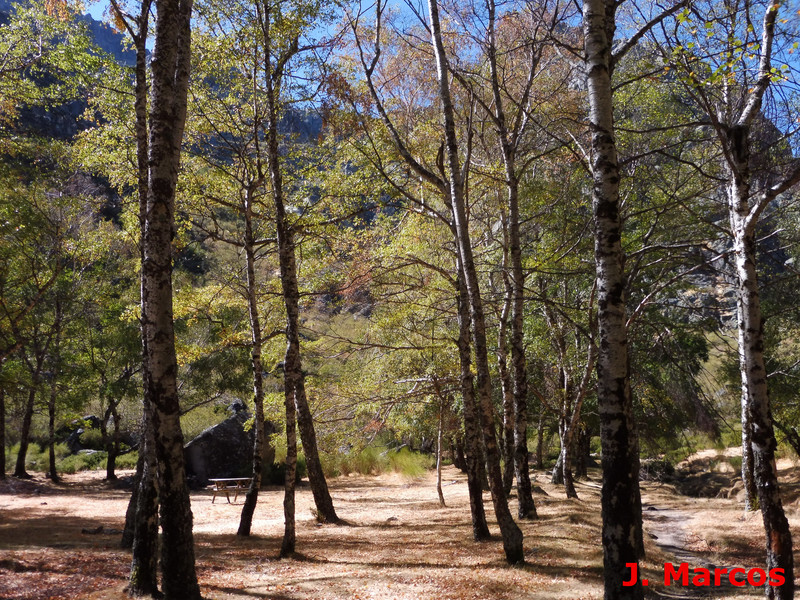 Bosque de Betula pubescens. Crédito Javier Marcos