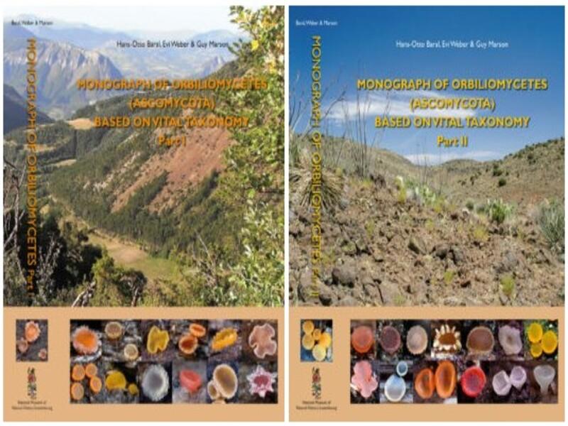 Monograph of Orbiliomycetes (Ascomycota) based on vital taxonomy. Crédito BARAL & col., 2020.